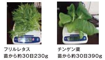 あんしん野菜希で栽培促進した野菜